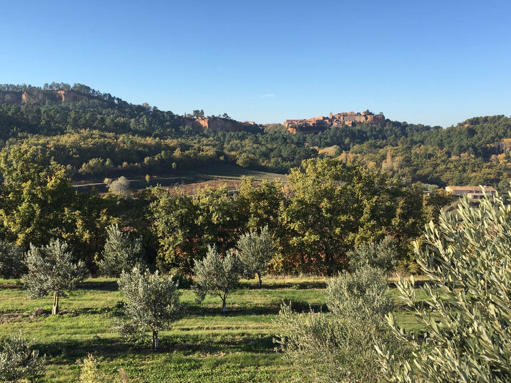 finets-olviers-paysage-roussillon